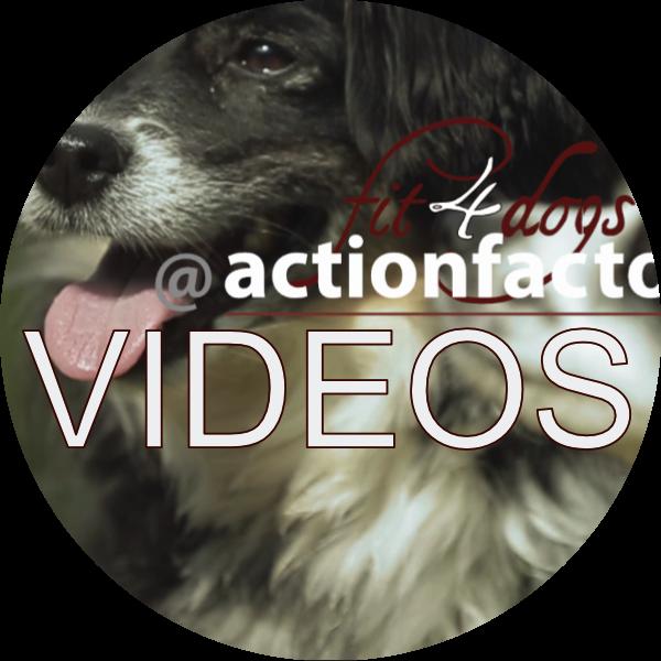 all-videos-head